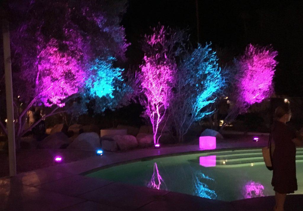 Uplight on trees